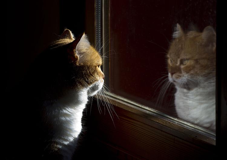 La metafora dello specchio loggia giordano bruno - Frasi sul riflesso dello specchio ...