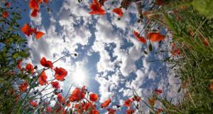Equinozio-di-primavera-2014-640x342